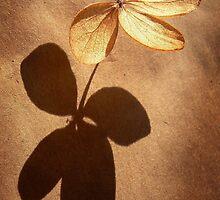 Petals by Gisele Bedard