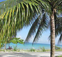 Palm tree in Cozumel by mltrue