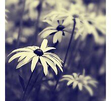 Garden Bokeh Photographic Print