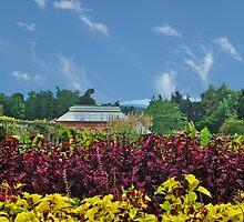 Late Summer,  Biltmore Estate North Carolina by Mike Pesseackey (crimsontideguy)