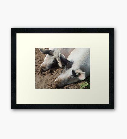 Sleeping Pigs Framed Print