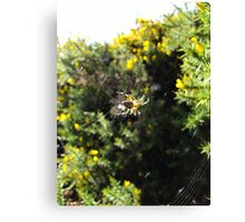 spider on the moors Canvas Print