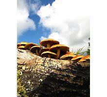 Mushrooms on the moors Photographic Print