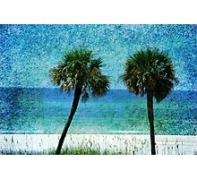 Palm trees at Gulf Coast  Photographic Print