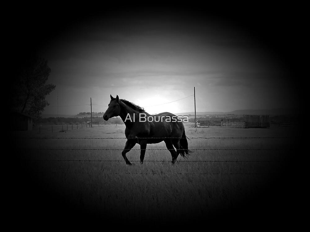 Magnificent Black by Al Bourassa