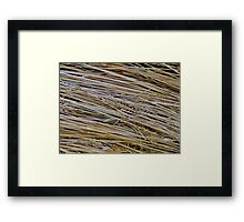 Find The Needle III Framed Print