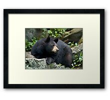 Portrait of a Black Bear  Framed Print