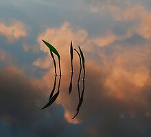 True Reflections by Paul Bettison