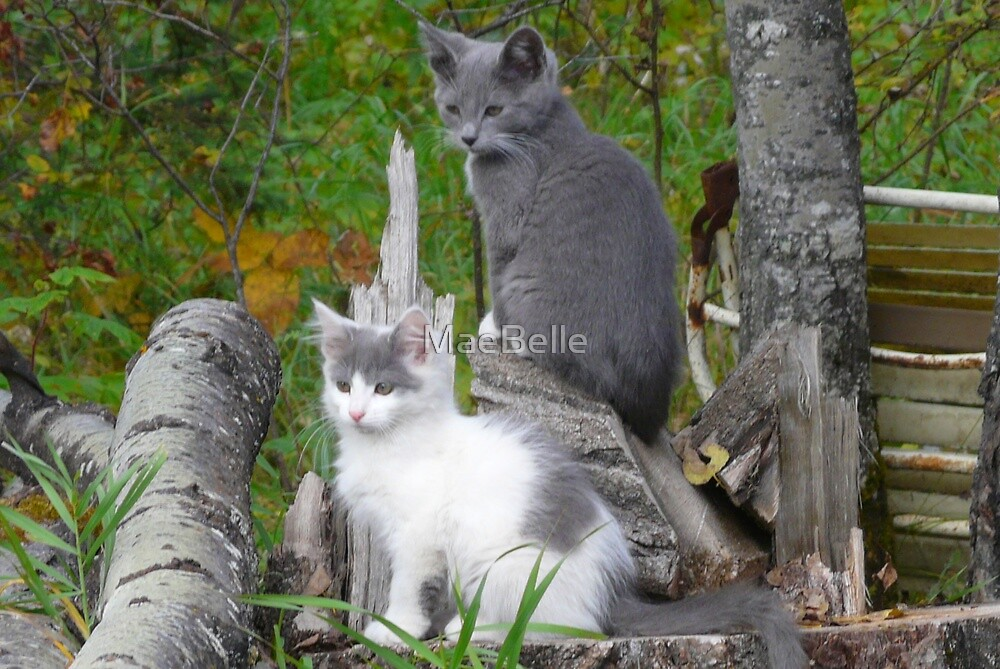 Shadow and Spook   Our Pets by MaeBelle