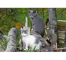 Shadow and Spook   Our Pets Photographic Print