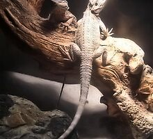 Bearded Dragon in Cage by Kerri Rachelle