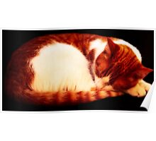 Warm Sleeping Kitten Curled Up Poster