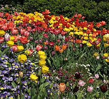 Yearning for Tulips by Patty Boyte
