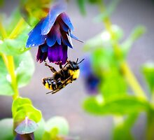 Bumbling Bee by James Zickmantel