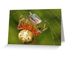 Marbled Orb Weaver (Araneus marmoreus) Greeting Card