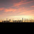 Sunset at the Vineyard by Jaclyn Hughes