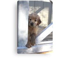 Beau Saying Notice Me I Am Being Totally Cute- 10 Canvas Print