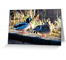Duck Couple Greeting Card