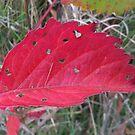 Red Leaf by Diane Trummer Sullivan