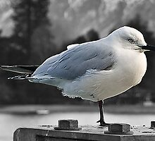Long John Silver Seagull by gamaree L