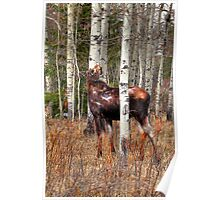 Lone moose Poster