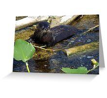 fishing at Rodman Dam, Florida Greeting Card