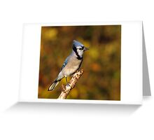 Classic Pose - Blue Jay Greeting Card