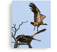 Vultures taking off! Canvas Print