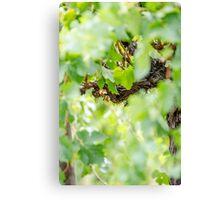 Light Vines Canvas Print