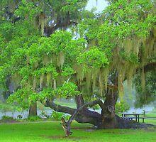 One Of City Parks Oak Trees  ( A Rainy Day) by Wanda Raines