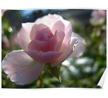Sunny sweetness petals Poster