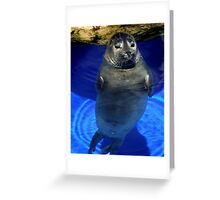 Seal Greeting Card