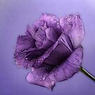 Purple Passion by Ann  Van Breemen