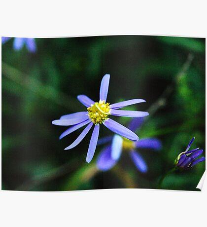 Estrella Púrpura Poster