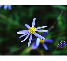 Estrella Púrpura Photographic Print