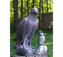 BIG BIRD & little bird.  Photographic Print