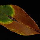 Natures Colours by pnjmcc