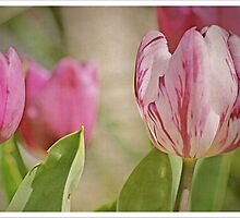 Tulip Time in the Park  by Sim Baker