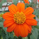 A bright orange flower by Peggy Burch