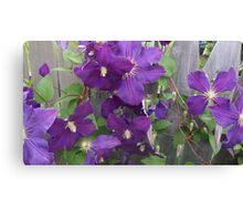 Pretty purple violets in vermont Canvas Print