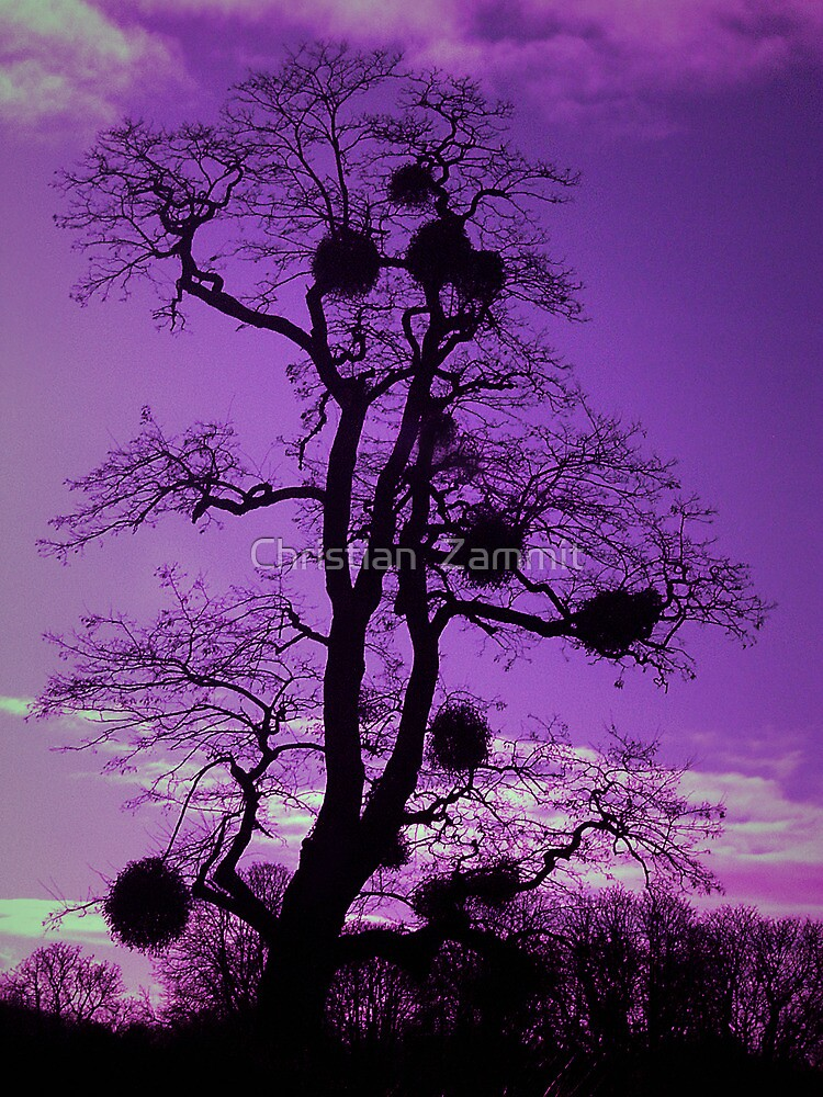Tree - Purple sky by Christian  Zammit