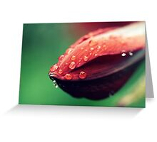 Raindrops on a Whale Greeting Card
