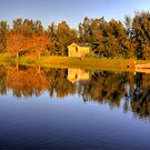 A beautiful winter's morning reflected, Tanunda, Barossa by Elana Bailey