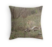 Cheetahs feeding in Kruger Park Throw Pillow