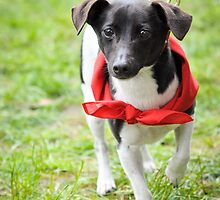 Little dog in a red bandana by -gila-
