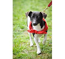 Little dog in a red bandana Photographic Print