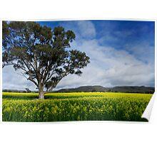 Brisbane Ranges' Golden Carpet Poster