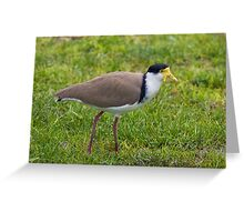 Masked Lapwing Greeting Card
