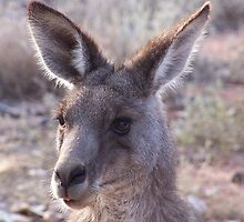 Kangaroo at close quarters by Christine28