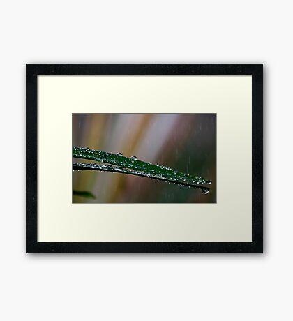 Fresh and dewy Framed Print